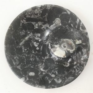buy small fossil plate from Morocco