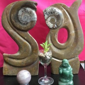 Goniatite Sculptures