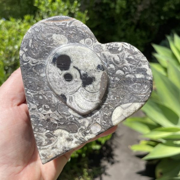 buy fossil wish box in Sydney